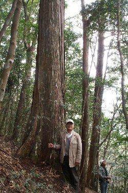 森の巨人たち100選「四万十の檜仙人」